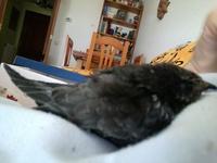 Mal apetito en aves, Desconocida
