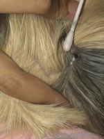 Heridas en roedores, Cobaya