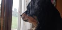Secreción ocular en perros, Can de palleiro