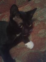 Loki, mi gato común europeo macho, tiene diarrea