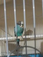 Estreñimiento en aves, Desconocida