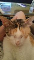 Babi, mi gato desconocida hembra, tiene estornudos y úlcera en la nariz
