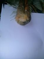 J'ai une question sur Cigogne, mon oiseau croisement mâle