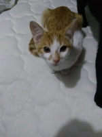 Gusanos en las heces en gatos, Desconocida
