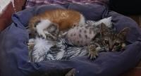 Heces o diarrea muy olorosas en gatos, Desconocida