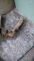 Se chupa las patas en gatos, Desconocida