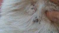 Heridas que no curan o cicatrizan en perros, Desconocida