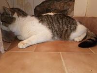 Mishi, mi gato cruce macho, tiene dificultad al caminar o levantarse y se chupa las patas