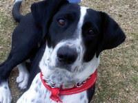 Lyka, mi perro cruce de collie hembra, tiene caspa, piel seca y mal olor en la piel
