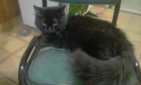 Diarrea en gatos, Desconocida