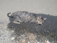 Gatita, mi gato desconocida hembra, tiene debilidad, aborto y pérdida de peso o adelgazamiento