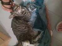 Aborto en gatos, Desconocida