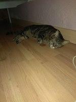 Lola, mi gato desconocida hembra, tiene heridas y agresiones