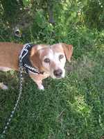 Desorientación en perros, Desconocida