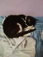 Campas, mi gato desconocida macho, tiene vómito verde