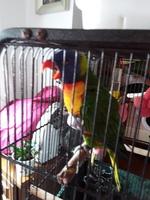 Jadeo en aves, Desconocida