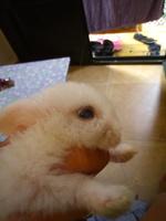 Copito, mi mascota desconocida macho, tiene nubes o película transparente blanca en los ojos