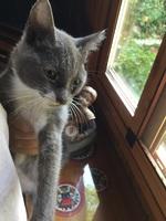 Joep, mi gato desconocida hembra, tiene respira con dificultad, secreción nasal verdosa y lagrimeo verdoso o amarillento