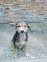 Missy, mi perro cruce de dálmata hembra, tiene picor y rascarse, mal olor en la piel y caspa