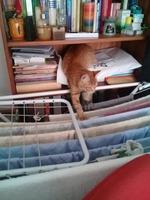 Mal aliento en gatos, Desconocida