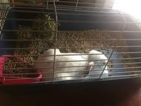 Petunia, mi mascota desconocida hembra, tiene pérdida de peso o adelgazamiento
