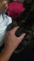 Dificultad para defecar en gatos, Común europeo