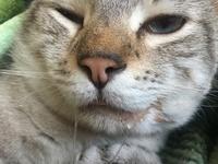 Babeo excesivo o espuma blanca por la boca en gatos, Desconocida