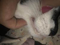 Erupciones en la piel en gatos, Desconocida