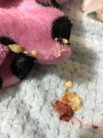 gatito sangrado rectal