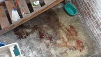 Django, mi perro rottweiler macho, tiene vómito, vómito blanco espumoso y sangre en las heces