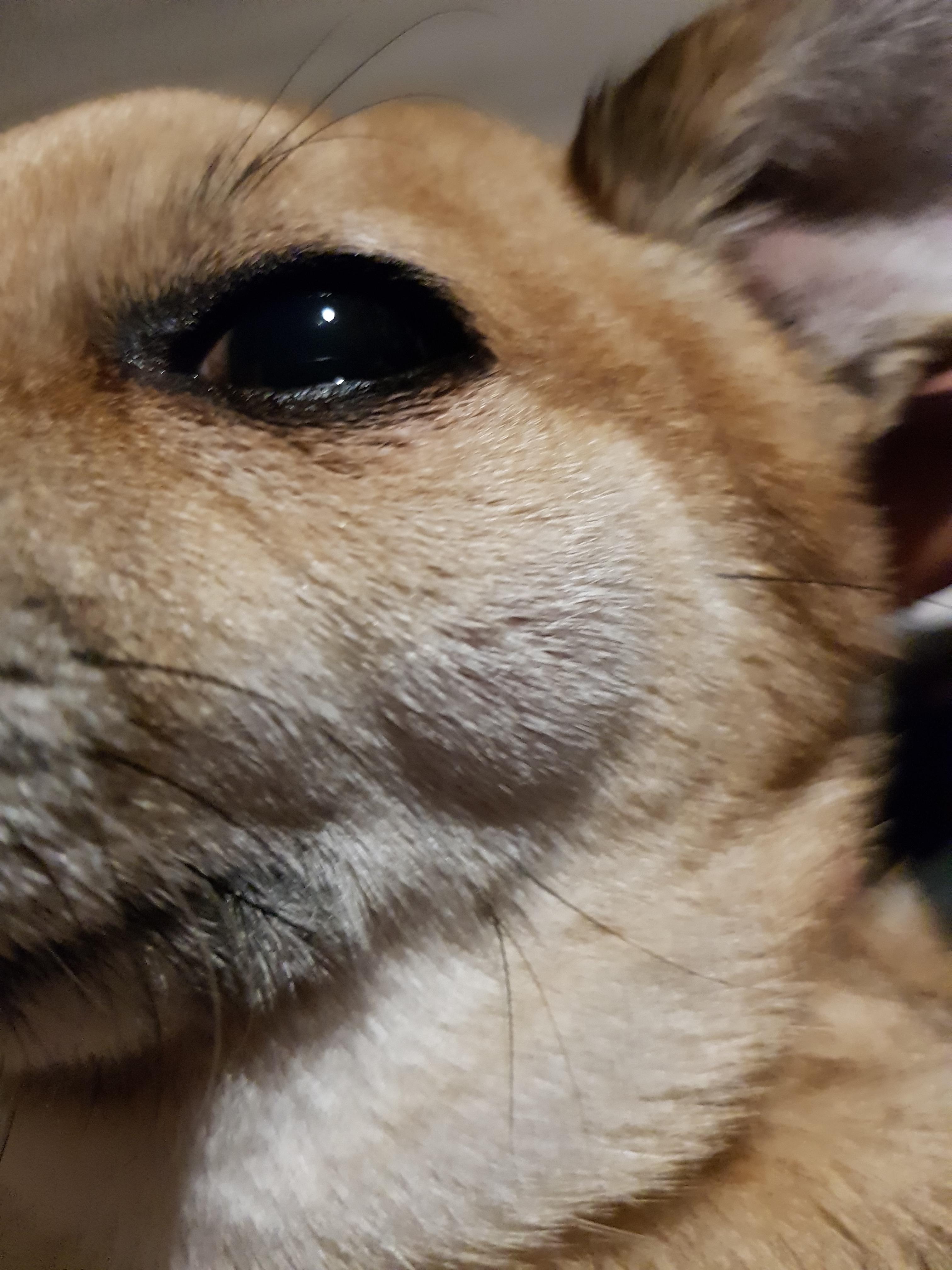 mi perro tiene bolitas debajo de la piel