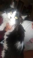 Apatía en gatos, Desconocida