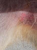 Titanc, mi perro pastor alemán macho, tiene edema en la piel