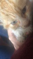 Nino, mi gato cruce de angora turco macho, tiene sangre en las heces, deshidratación y mucho moco en la nariz