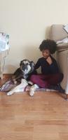 Ela, mi perro cruce de pastor alemán hembra, tiene gusanos en las heces