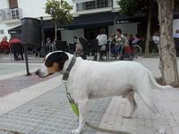 Garaje, mi perro ratonero bodeguero andaluz macho, tiene ataque epiléptico y babeo excesivo o espuma blanca por la boca