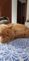 Duque, mi gato desconocida macho, tiene vómito, babeo excesivo o espuma blanca por la boca y vómito amarillo