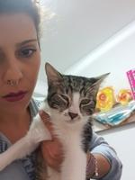 Pupilas dilatadas en gatos, Europeo de pelo corto