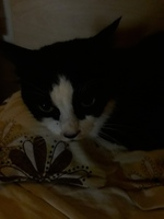 Dificultad al masticar en gatos, Desconocida