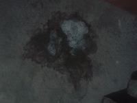 Abdomen inflamado en perros, Pit bull