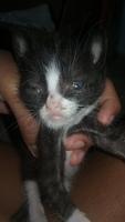 Mia, mi gato desconocida hembra, tiene mal apetito, cojera y dolor al contacto