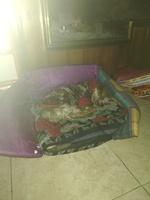 Sangre en las heces en perros, Yorkshire terrier