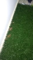Snoopy, mi perro bichon maltés macho, tiene diarrea, vómito con sangre y heces o diarrea muy olorosas