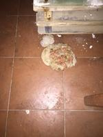 Vómito blanco espumoso en perros, Pit bull