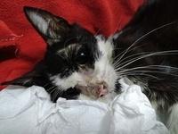 Pupilas dilatadas en gatos, Desconocida