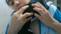 Reacción por vacuna en perros, Pinscher miniatura