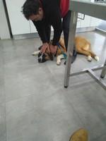Lolo, mi perro cruce de mastín español macho, tiene mal apetito, vómito y vómito amarillo