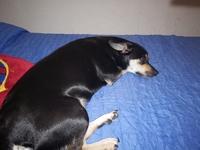 Abdomen inflamado en perros, Desconocida