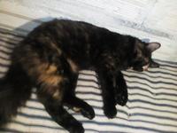 Mal apetito en gatos, Angora turco