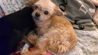 Ataque epiléptico en perros, Desconocida